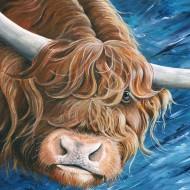 highland-cows